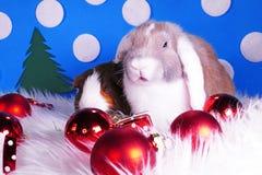 Cute christmas animals. Xmas pet animal guinea pig lop rabbit. Cute christmas animals. Xmas pet animal stock photography