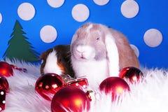 Cute christmas animals. Xmas pet animal guinea pig lop rabbit. Cute christmas animals. Xmas pet animal stock image