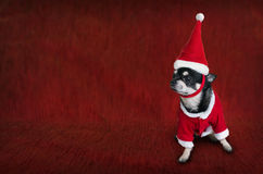Cute Christmas card with a dog in Santa`s costume Stock Photography
