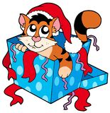Cute Christmas cat Royalty Free Stock Photos
