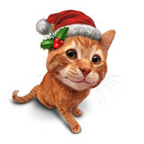 Cute Christmas Cat Stock Photography