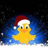 Christmas chick on festive background. Cute Christmas Chick wit Santa Hat on Black abd Blue Background with Snow and Stars Royalty Free Stock Images