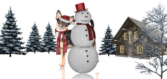 Cute christmas dog chihuahua after snowman white background Stock Photos