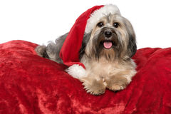 Cute Christmas dog with a Santa hat is lying on a red blanket Stock Photo