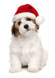 Cute Christmas havanese puppy dog Royalty Free Stock Photos