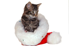 Cute christmas kitten Royalty Free Stock Photography