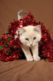 Really cute christmas kitten 4 Stock Image