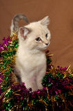 Really cute christmas kitten 5 Royalty Free Stock Images