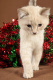 Really cute christmas kitten close-up Stock Photos