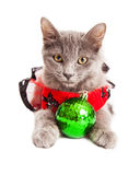 Cute Christmas Kitten Looking Into Camera Royalty Free Stock Photography