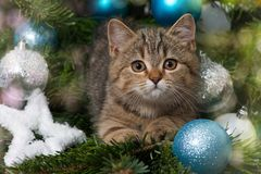 Cute christmas kitten with a snow star Stock Photography