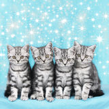 Cute christmas kitten with starsCute christmas kitten. Cute kitten in a rowCute christmas kitten with blue background and stars Stock Image