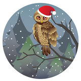 Cute Christmas Owl Stock Images