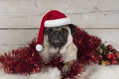 Cute Christmas pug puppy dog, lying down in red tinsel wearing santa claus hat, on sheepskin with ornaments. And vintage wooden background Stock Photo