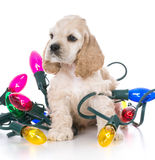 Cute christmas puppy Stock Photography