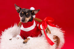 Cute Christmas puppy dog Royalty Free Stock Photo