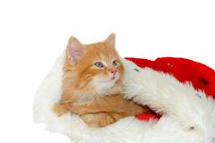 Cute christmas red kitten Stock Photos