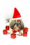 Cute christmas shih tzu Royalty Free Stock Photo