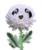Cute chrysanthemum flower Royalty Free Stock Images