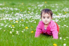 Cute chubby toddler crawling on the grass exploring nature outdoors in the park eye contact.  Royalty Free Stock Photos