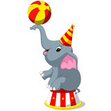 Cute Circus elephant with a striped ball stands on a podium. Illustration of Cute Circus elephant with a striped ball stands on a podium Stock Image