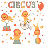 Cute circus lions collection Stock Images