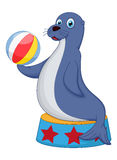 Cute circus seal playing a ball Royalty Free Stock Photography