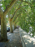 Cute city alley, bright hottest day at the end of summer. Old sycamores. Stock Photos