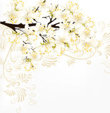 Cute clear floral spring vector background with blossoming  bran Stock Photos