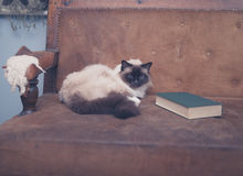 Cute and clever cat with book on sofa Stock Photo