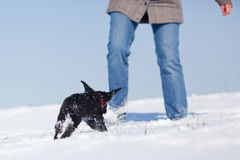 Cute puppy and a woman play in the snow Royalty Free Stock Image