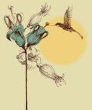 Cute colibri invitation card Royalty Free Stock Photo