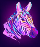 The cute colored zebra head Royalty Free Stock Photo