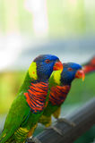 Cute colorful birds Stock Photos