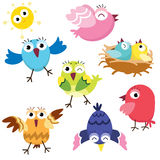 Cute Colorful Birds Stock Photography