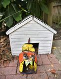 Metal bull dog statue defending house. A cute colorful bull dog statue made from metal is defending his white dog house showing its vicious and large teeth stock images