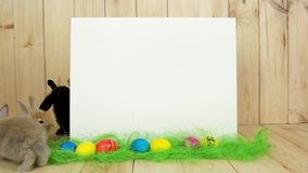 Cute colorful bunnies have fun, white background for text, spring holiday, easter symbol. Rabbits crawling on green floor, space for drawing, wooden walls