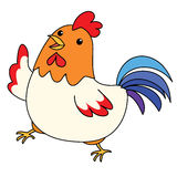 Cute colorful chicken take a walk  Stock Photography
