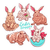 Cute colorful easter bunnies Stock Photos