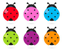 Cute colorful Ladybug set Royalty Free Stock Photo