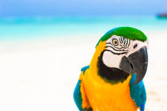 Cute colorful parrot on tropical white sandy beach Royalty Free Stock Images