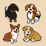 Cute coloured dog amazing vector illustration. Cute cartoon dogs vector puppy pet characters breads doggy illustration. Cute coloured dog amazing vector vector illustration