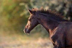 Free Cute Colt Portrait Stock Image - 125824361