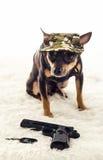 Cute commando dog Royalty Free Stock Photo