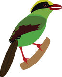 Cute Common Green Magpie vector. Cute Common Green Magpie cartoon vector vector illustration