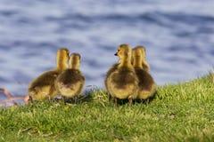 Cute company near the lake Royalty Free Stock Photos