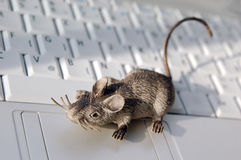 Cute computer mouse Stock Photos