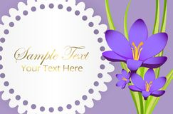 Cute Congratulation Postcard with Crocus Flower Stock Images