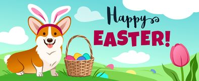 Cute corgi dog in Easter bunny costume sits in green field, basket full of candy eggs, eggs hidden in grass, vector cartoon stock photos