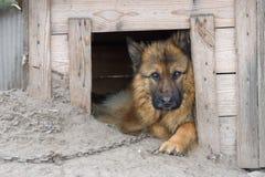 Cute country dog Stock Photos